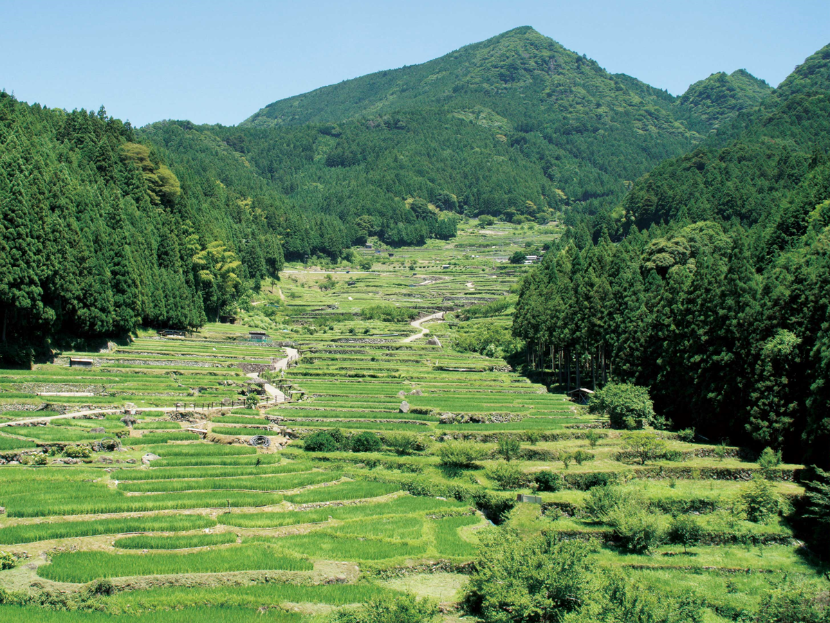 Yotsuya Senmaida Terraced Rice Fields